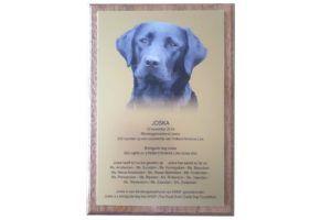 Een bijzondere plaquette voor een bijzondere hond